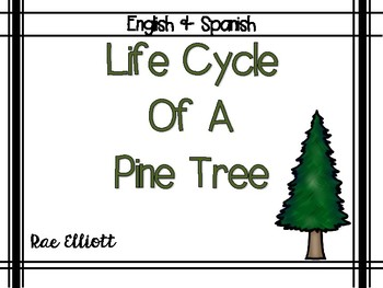 Life Cycle of a Pine Tree-Bilingual