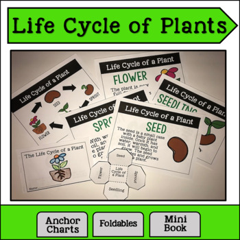 Life Cycle of a Plant