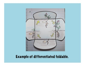 Life Cycle of a Plant 4 Tab Science Interactive Foldable