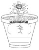 Life Cycle of a Plant Book and Student Milk Carton Garden