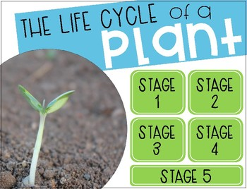 Life Cycle of a Plant {Clickable}