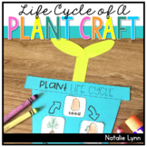 Life Cycle of a Plant Craft