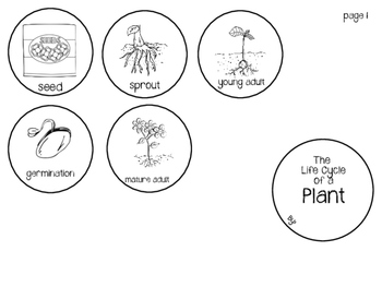 Life Cycle of a Plant Craftivity