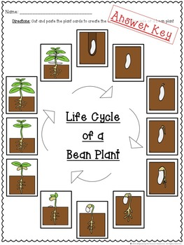 Life Cycle of a Plant Cut and Paste
