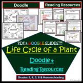 Life Cycle of a Plant Doodle Notes   Science Doodles   Study Passages Grades 3-6