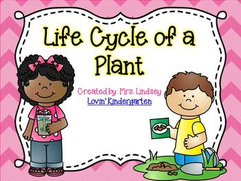 Life Cycle of a Plant  {ELA, Science and Anchor Charts}