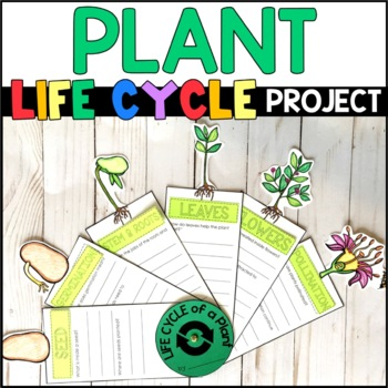 Life Cycle of a Plant: Fact Fan