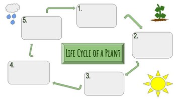 Life Cycle of a Plant Graphic Organizer