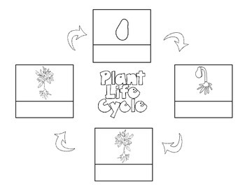 Life Cycle of a Plant: Journal, KWL, sequencing