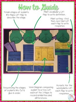 Life Cycle of a Plant Lapbook {with 10 foldables} Flower Life Cycle INB