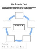 Life Cycle of a Plant Organizer Worksheet