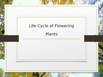 Life Cycle of a Plant PowerPoint