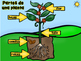 Life Cycle of a Plant (Spanish)