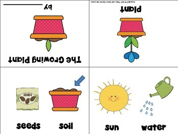 Life Cycle of a Plant Vocabulary Cards and Mini Books BUNDLE