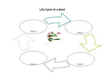 Life Cycle of a Plant and seed