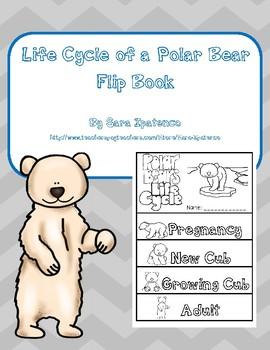 Life Cycle of a Polar Bear Mini Unit