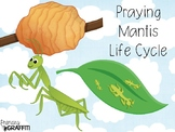 Life Cycle of a Praying Mantis {Observation Journal}