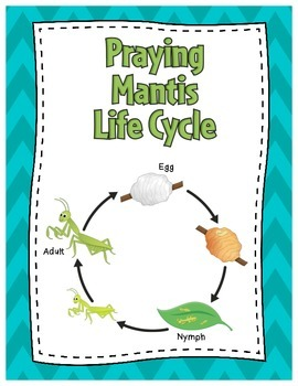 Life Cycle of a Praying Mantis Posters