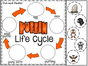 Life Cycle of a Puffin Informational Pack