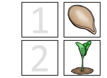 Life Cycle of a Pumpkin Anchor Chart and Worksheet
