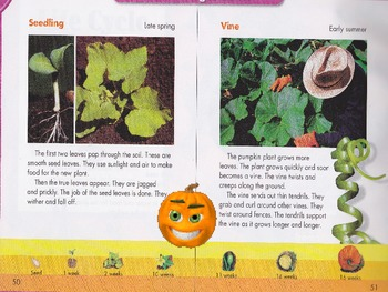 """Life Cycle of a Pumpkin"" Brought to Life Through Animations"