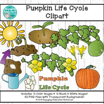 Life Cycle of a Pumpkin Clipart