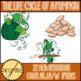 Life Cycle of a Pumpkin Clip Art