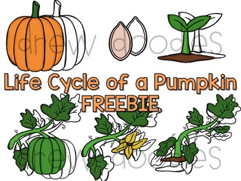 Life Cycle of a Pumpkin FREEBIE- Color and Black Line Versions