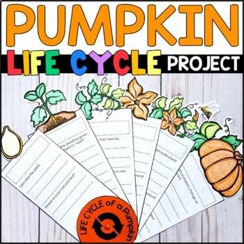 Life Cycle of a Pumpkin: Fact Fan