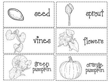 Life Cycle of a Pumpkin: Writing
