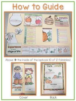 Life Cycle of a Pumpkin Lapbook {with 13 foldables} Pumpkin Life Cycle INB