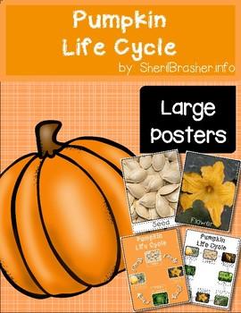 Life Cycle of a Pumpkin   Lg Posters   English