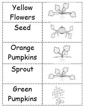 Life Cycle of a Pumpkin Pack
