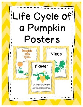 Life Cycle of a Pumpkin Posters