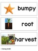 """""""Life Cycle of a Pumpkin"""" (Reading Street Resource)"""