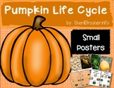 Life Cycle of a Pumpkin | Sm Posters | English