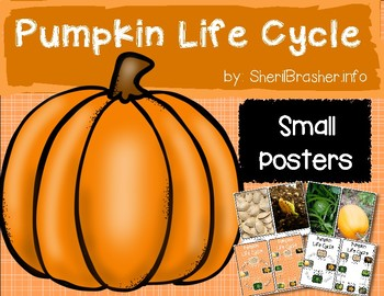 Life Cycle of a Pumpkin   Sm Posters   English