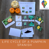 Life Cycle of a Pumpkin in Spanish (Montessori)