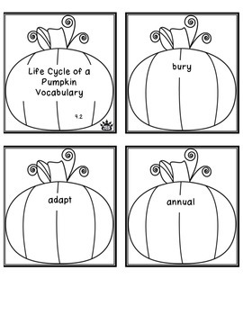 Life Cycle of a Pumpkin vocabulary  book