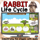Life Cycle of a Rabbit