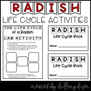 Life Cycle of a Radish
