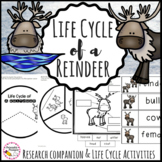 Life Cycle of a Reindeer