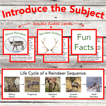 Life Cycle of a Reindeer Sequencing Cards