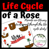 Life Cycle Activities | Roses