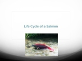 Life Cycle of a Salmon PowerPoint
