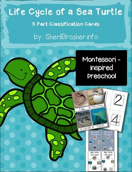 Life Cycle of a Sea Turtle | 3 Part Cards PreK | English