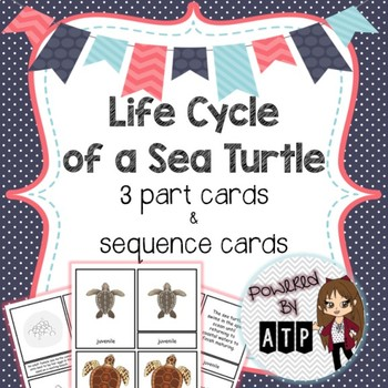 Life Cycle of a Sea Turtle 3 part cards & sequence cards