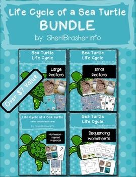 Life Cycle of a Sea Turtle   BUNDLE   English {SAVE 20%}