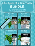 Life Cycle of a Sea Turtle | BUNDLE | English {SAVE 20%}