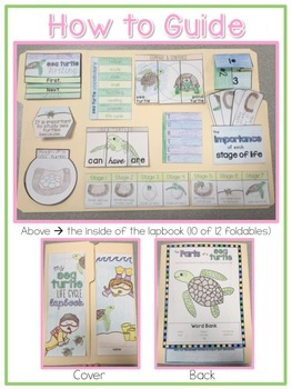 Life Cycle of a Sea Turtle Lapbook {with 12 foldables} Sea Turtle Life Cycle INB